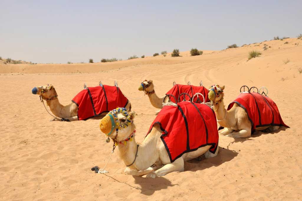 Dubai-Desert-Travel